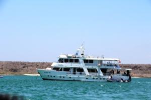 Estreslla Del Mar